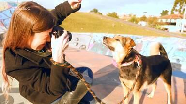 Veja o dia de modelos dos cães do Projeto Adote com Consciência - As fotos caprichadas ajuda os bichinhos a serem adotados mais rápido