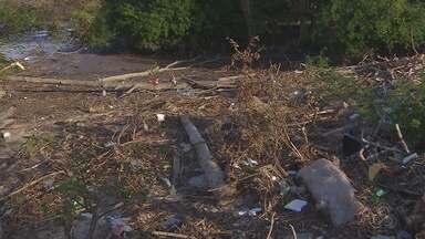 Trocos de árvores e lixo tomam contas das orlas de Macapá - Trocos de árvores e lixo tomam contas das orlas de Macapá.