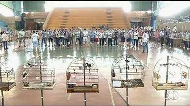 Torneio de canto de pássaros reúne criadores de várias cidades em Jataí - Nessa modalidade, vence a ave que canta mais por um tempo determinado.