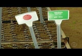 Sementes da 'floresta dos atletas' ficam em Silva Jardim, RJ, para germinação - Sementes foram plantadas na abertura da Olimpíada.