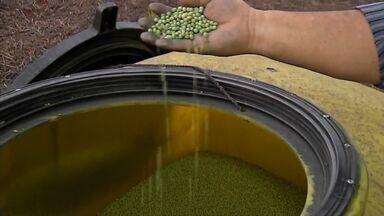 Plantio de soja está acelerado no Médio-norte do estado - Os agricultores estão otimistas com a safra e alguns até aumentaram a área plantada.