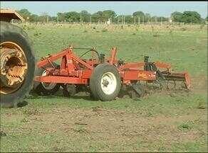 Chegada da chuva deixa produtores de grãos otimistas no Tocantins - Chegada da chuva deixa produtores de grãos otimistas no Tocantins