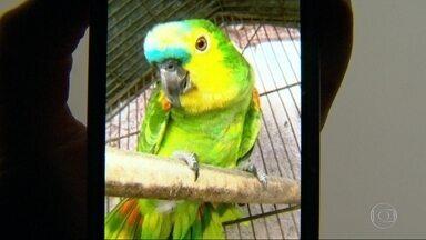 Papagaio é apreendido, mas Justiça do Rio manda devolver ave à dona - Ave era da idosa Irany, de 82 anos, e está desaparecida. Há um mês, o bicho foi levado por polícias do batalhão florestal.