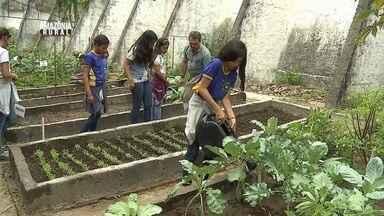 Parte 3: Conheça uma escola que técnicas da agricultura como forma de ensino - Crianças se dedicam para cuidar de uma horta.
