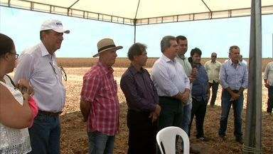 Mais uma edição do projeto Dia de Campo acontece em Campo Alegre - Programa de grãos em Alagoas vem sendo consolidado a cada safra.