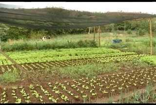Plantio de hortas muda vida de produtores de Juramento - Moradores consomem produtos e o que sobre dá pra vender.