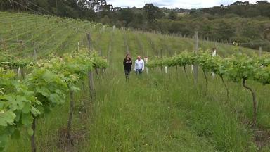 O mundo dos vinhos (parte 2) - Tradicional, apreciado no mundo todo e ainda bom para a saúde, o vinho movimenta um mercado milionário. No Paraná, algumas vinícolas dominam toda a cadeia, do plantio das uvas à venda das garrafas.