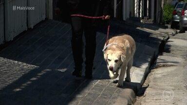 Labrador ficou obeso por comer muita besteira em casa - Dona de Armani diz que costumava dar bolo e pizza para o cachorro. Agora, o labrador precisa perder pelo menos 10 Kg para melhorar a saúde