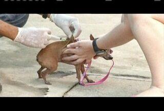 Cães e gatos são vacinados durante campanha em Valadares - Campanha é contra a raiva; 24 mil animais devem receber vacina só na área urbana.