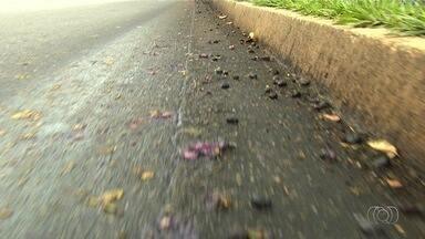 Enterrado corpo de motociclista que morreu em acidente após escorregar em jamelões - Caso aconteceu no Setor Vila Pedroso.