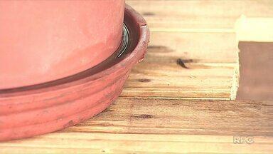 Preocupação com o Aedes Aegypti volta depois de temporada de chuva - Epidemia pode voltar no verão.