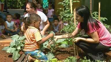 Trabalho feito em escolas leva a meninada a se interessar por alimentos diferentes - Fazer as crianças aprender mais sobre o cultivo e o cuidado com a terra pode fazer milagres.