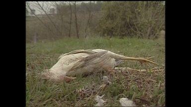 Chupa-cabra deixou todo o Brasil em alerta na década de 90 - Um mistério se espalhava pelo país. Era a lenda do chupa-cabra – um bicho, supostamente sanguinário, que matava os animais de forma brutal. A cada dia, novos casos apareciam.