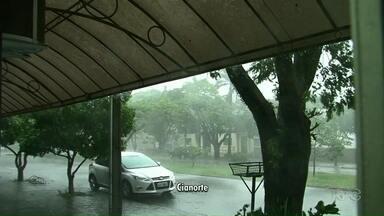 Chuva com ventos fortes arranca árvores na região - Em Umuarama a velocidade do vento chegou a 100 km.