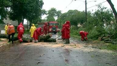 Ventos fortes derrubam árvore em Foz do Iguaçu - A rua Safira, no Parque Ouro Verde, ficou interditada por algumas horas