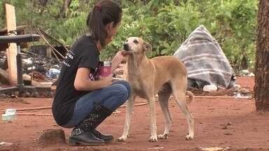 Voluntários resgatam animais de área desocupada no Noroeste - Vinte pessoas foram resgatar os animais deixados pelas famílias que foram retiradas do local na última segunda (31).