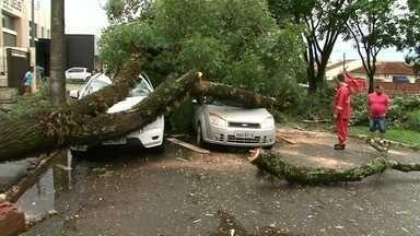 Temporal causa sustos e prejuízo em Cianorte - Mais de 50 árvores caíram com a força do vento, que chegou a 100 quilômetros por hora. Várias casas foram destelhadas.