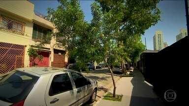 Verdejando volta para incentivar o plantio e o replantio de árvores na cidade - O Verdejando irá mostras como estão as árvores que foram plantadas há quatro anos e alertar para a importância de verdejar.