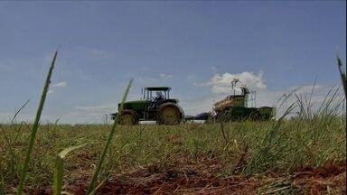 Venda antecipada de soja não deslanchou em Mato Grosso - Plantio da safra está bem avançado por causa das chuvas na região.