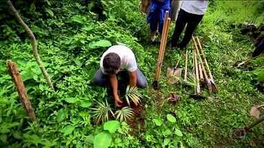 Verdejando faz mutirão de plantio às margens de córrego em Perus - As árvores causam redução do calor, ajudam na qualidade do ar e reduzem os problemas provocados pela chuva. Um estudo da Fundação SOS Mata Atlântica também comprova a importância do verde para o abastecimento de água.