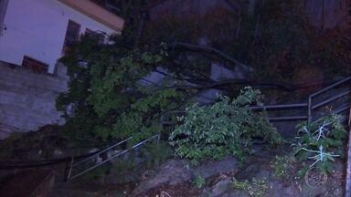 Árvore cai no Ouro Preto, na Região da Pampulha, em Belo Horizonte - Bombeiros disseram que queda foi causada pela chuva.