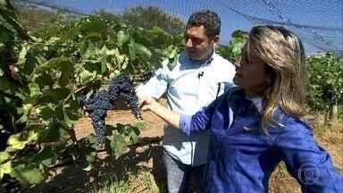 Casal abandona cidade grande para plantar uvas na Serra dos Pirineus - Entre tantas áreas ao redor do mundo e do Brasil, onde a produção já é consolidada, casal decide desbravar o cerrado em Goiás.