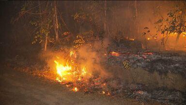 Incêndio queima mata no Brejo da Paraíba - Chamas atingiram zona rural da cidade de Areia