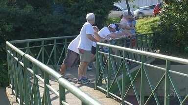 Grupo faz da atividade física um remédio contra efeitos do tempo - Muitos se perguntam qual a melhor idade pra começar uma atividade física, mas o mais importante, segundo especialistas é escolher o que te dá mais prazer e começar logo.