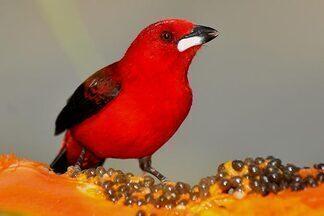 Crônica de Natal - Crônica de Natal faz reflexão sobre o presente e tem aves como inspiração.