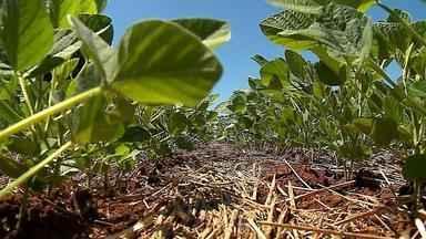 Produtores estão otimistas com a previsão da safra de grãos no RS - Para que a expectativa se confirme, no entanto, eles precisam de chuva.