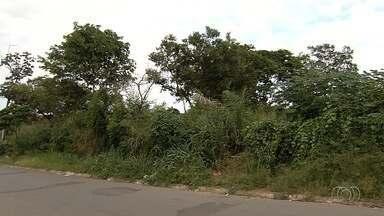 População reclama do mato alto em bairros de Aparecida de Goiânia - Prefeitura afirma que vai roçar esses locais e pede que os donos de lotes baldios tomem providência.