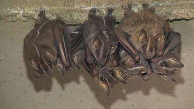 Agentes encontram colônia de morcegos na garagem de um prédio em Vitória - Oito morcegos foram encontrados em prédio na Reta da Penha.