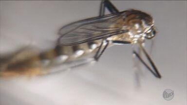 Sobe para 48 o número de casos suspeitos de febre amarela no Leste de Minas Gerais - Sobe para 48 o número de casos suspeitos de febre amarela no Leste de Minas Gerais