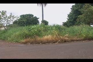 Moradores de Ituiutaba reclamam dos problemas gerados por causa de matagais em lotes - Mato traz insegurança e animais peçonhentos. Secretário de Obras falou sobre a situação.