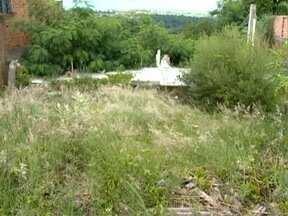 Terreno baldio incomoda moradores no Jardim Aviação - Local é propício como criadouro de insetos.