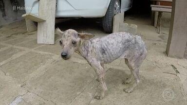 Animais que sofreram maus-tratos são resgatados - Saiba como ajudar em casos semelhantes