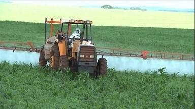 Uso inadequado de veneno na agricultura torna pragas mais resistentes - O uso incorreto de agrotóxicos está provocando o aparecimento de pragas e doenças resistentes e tornando o controle cada vez mais difícil.