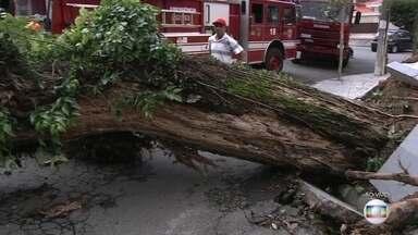 Dezenas de árvores caíram durante forte chuva nesta segunda (6) em SP - Teve queda de árvores no bairro Butantã e na Lapa. Uma árvore que desabou na Alameda São Gualter, em Pinheiros, derrubou fios, arrebentou o encanamento de água e manteve as equipes da prefeitura ocupadas durante toda a madrugada. Mais uma vez, os moradores dizem que tinham avisado a prefeitura.