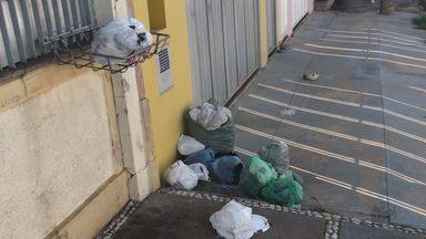 Greve de coletores continua e lixo fica espalhado pelas ruas de São Carlos, SP - Assembleia com funcionários e sindicato decidiu manter 30% dos serviços.