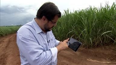 'Agricultura de precisão' ajuda a aumentar produção e reduzir custos - Startup voltada para agronegócio ajuda fazendeiros a aumentar produção. Maioria das agritechs brasileiras surgiu nos últimos dois anos.