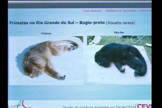 Mortes de Bugios são analisadas na Região das Missões - Dois animais foram encontrados mortos em Garruchos, RS.