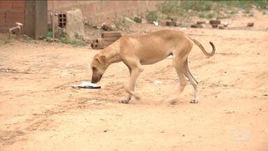 Aumenta o número de abandono de animais domésticos em Balsas - O abandono e maus tratos de animais domésticos é crime previsto em lei.