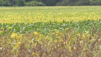 Plantio de soja aumentou mais de 70% na região do Vale do Jamari - Com a expansão, as oportunidades de novos negócios e a oferta de empregos no campo animam os produtores rurais.
