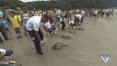 Tartarugas marinhas que recebiam tratamento são soltas em Guarujá - Local foi escolhido por ser o ideal para que animais tenham boa adaptação