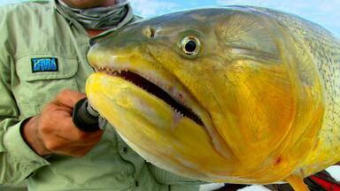 Dourado na Argentina. Receita de camarão da Gisele (Bloco 03) - Em Ita Ibaté, a briga é pelo rei do rio. Receita encanta top model.