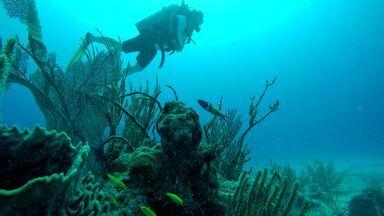 México e as belezas de Akumal - Tartarugas dominam a paisagem no litoral mexicano.