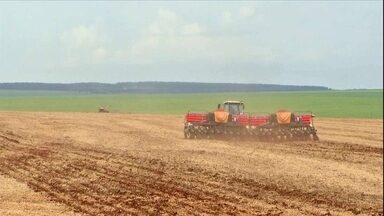 Produtores do MS já plantam milho safrinha apesar do custo da semente - Apesar da boa expectativa dos agricultores, plantar milho está mais caro nesta safra. O maior gasto é com as sementes.