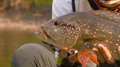 Pesca em águas amazônicas. Pão aromatizado feito em casa. (Bloco 03) - Peixes de couro nos rios da Amazônia. Pão saboroso e fácil de fazer.