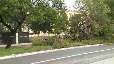 Temporal deixa dois mortos em São Paulo - Na Zona Sul da capital, um casal de moradores de rua estava dentro de uma barraca perto de uma árvore que caiu por causa da chuva. O homem foi atingido e morreu. A outra morte foi na Zona Leste.