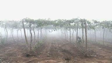 Em Guaraciaba do Norte, agricultores mantêm solo fértil para diversas culturas - NE Rural visitou a cidade para mostrar o trabalho dos agricultores.